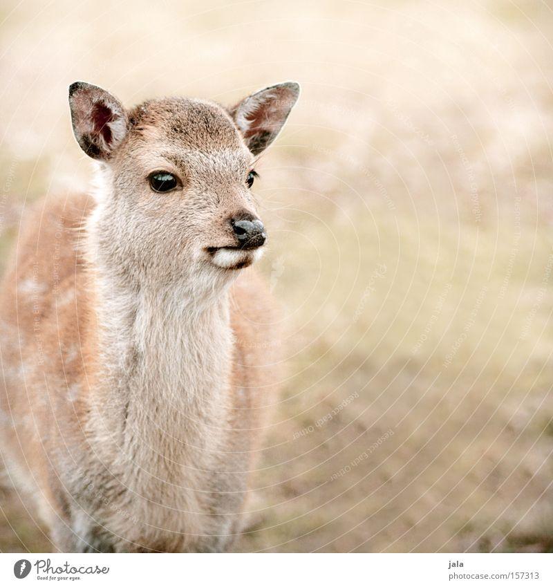 bambi love Natur Tier wild Wildtier Säugetier Schüchternheit Vorsicht Reh Hirsche Hirschkalb