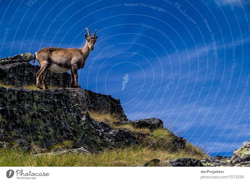 Neugierig? Natur Ferien & Urlaub & Reisen Pflanze Sommer Landschaft Tier Ferne Berge u. Gebirge Umwelt Freiheit Felsen Tourismus wandern Wildtier Ausflug