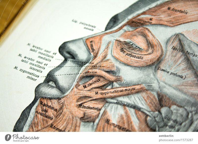 Gesicht Anatomie Arzt Buch Grafik u. Illustration Körper Körperteile Kopf Schulbücher Medikament Mensch Auge Nase Mund Stirn Muskulatur Sehne Studium