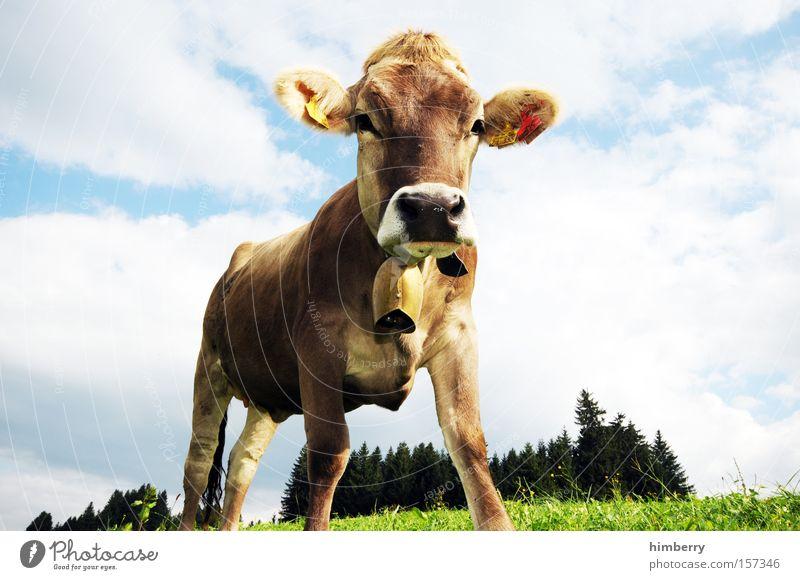bio rasenmäher Rind Landwirtschaft Kuh Säugetier Bioprodukte Biologische Landwirtschaft Tier Rasenmäher Milcherzeugnisse Milchkuh Molkerei Milchwirtschaft