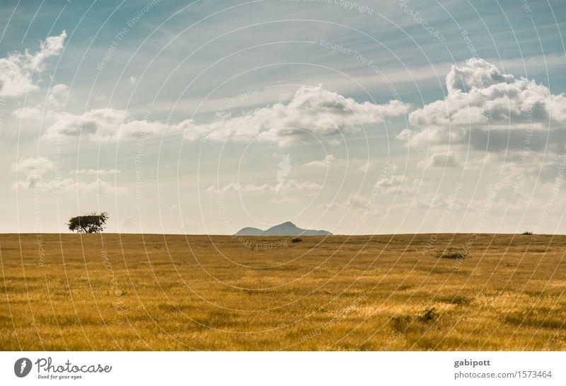 Kubanische Prärie Himmel Natur Ferien & Urlaub & Reisen blau Sommer Landschaft Wolken Ferne Berge u. Gebirge gelb Wege & Pfade natürlich braun Horizont Tourismus träumen