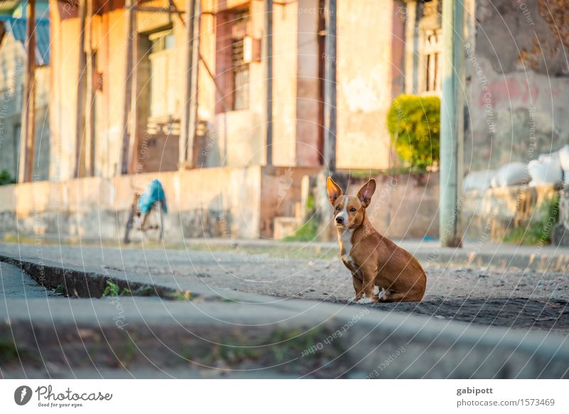 Cuba Hund Ferien & Urlaub & Reisen Haus Tier Wand Mauer Erde Fassade frei Fröhlichkeit warten Platz Armut beobachten Abenteuer niedlich