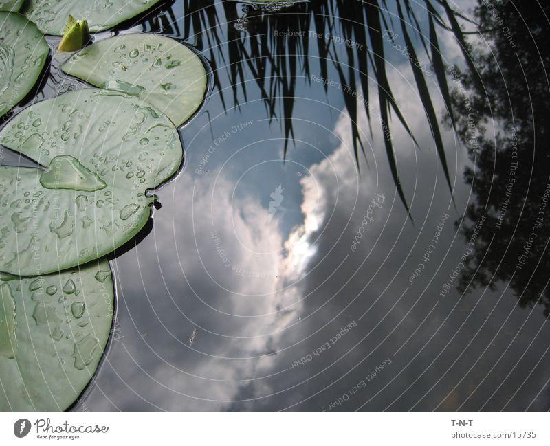 Himmel im Teich Wasser Wolken schlechtes Wetter Seerosen