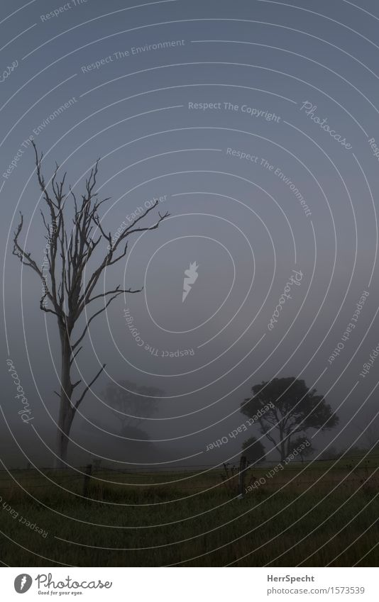 Nebelmorgen Natur Pflanze Baum Landschaft Umwelt Herbst Wiese Zusammensein Nebel ästhetisch Schönes Wetter