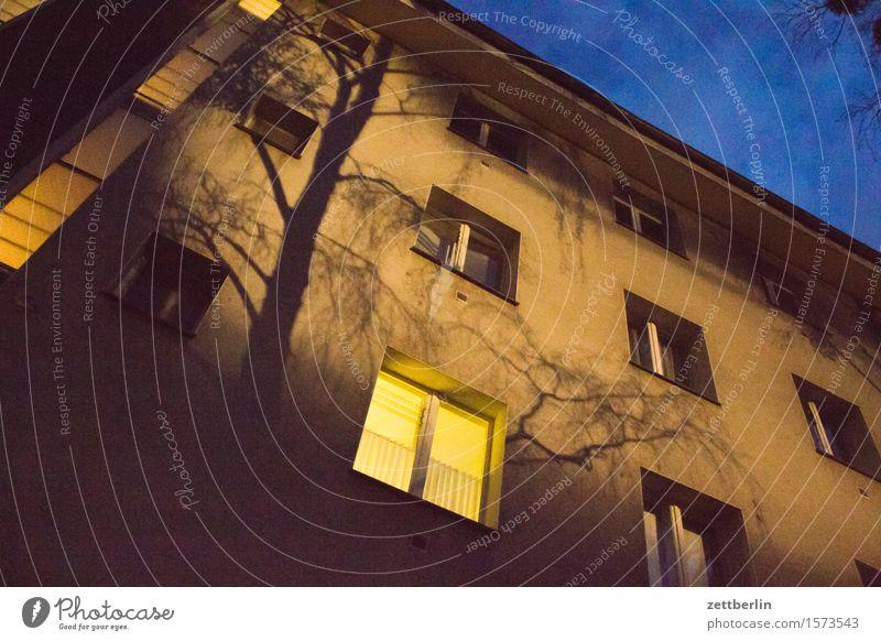 Licht am Abend Himmel Stadt Baum Haus Fenster Berlin Fassade hell Stadtleben Häusliches Leben Textfreiraum Ast Baumstamm erleuchten Zweig Wohnhaus
