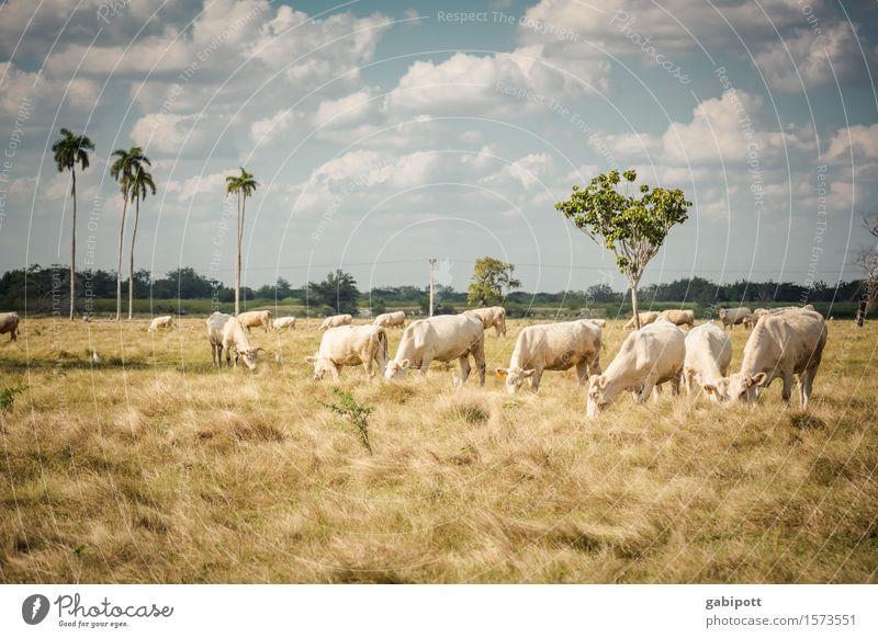 Kubanische Prärie Himmel Natur Ferien & Urlaub & Reisen Landschaft Ferne Freiheit Horizont Tourismus Feld Ernährung Sträucher Perspektive Ausflug Klima