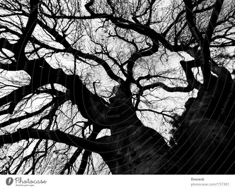 spieltrieb schwarz dunkel Natur Landschaft Baum Ast Sträucher Blatt Baumkrone kahl Trieb Wachstum Baumstamm durcheinander groß Macht Erde Sand Herbst
