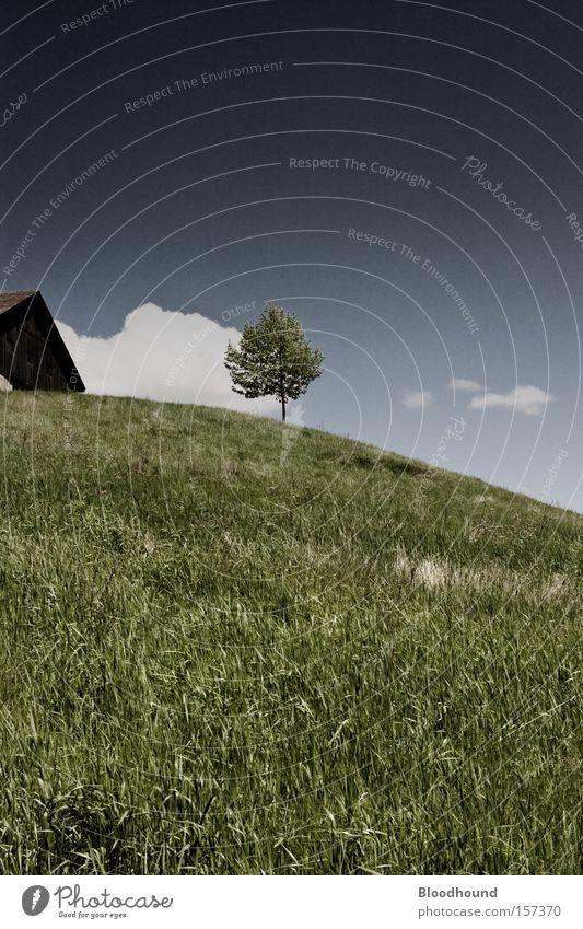 ^_i__ Farbfoto Gedeckte Farben Außenaufnahme Menschenleer Textfreiraum unten Tag Sommer Haus Umwelt Natur Landschaft Himmel Wolken Schönes Wetter Baum Gras