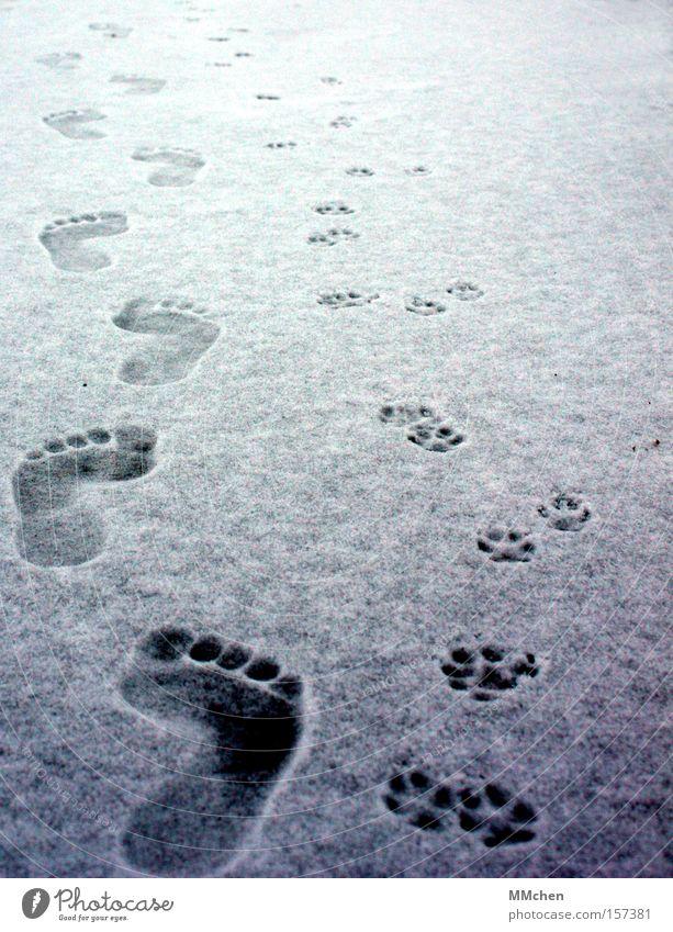 zu zweit Barfuß Laufsteg Mensch Tier Fußspur Zehen Pfote kalt Winter Schnee Eis