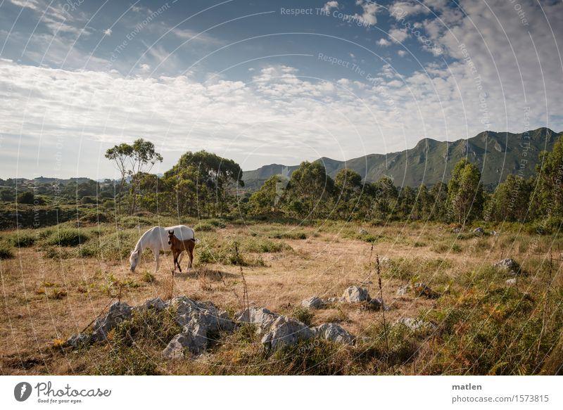 summer Landschaft Pflanze Himmel Wolken Horizont Sommer Wetter Schönes Wetter Baum Gras Sträucher Wiese Hügel Felsen Berge u. Gebirge Menschenleer Tier Haustier