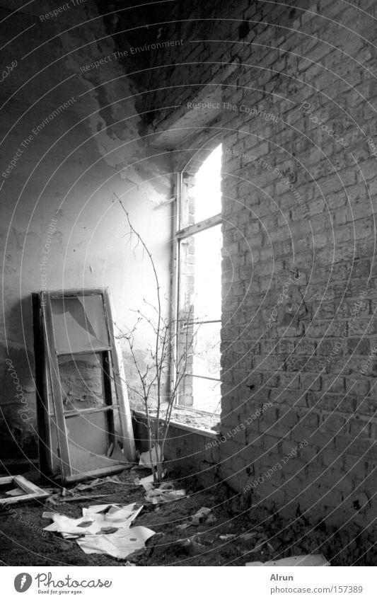 Einsames Fenster alt Mauer Raum Beleuchtung Sträucher kaputt verfallen gebrochen Fensterscheibe