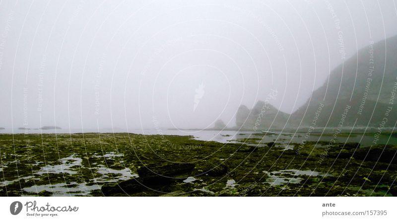Nebelbucht Meer Strand Küste Bucht mystisch unheimlich Klippe Neuseeland spukhaft schlechtes Wetter