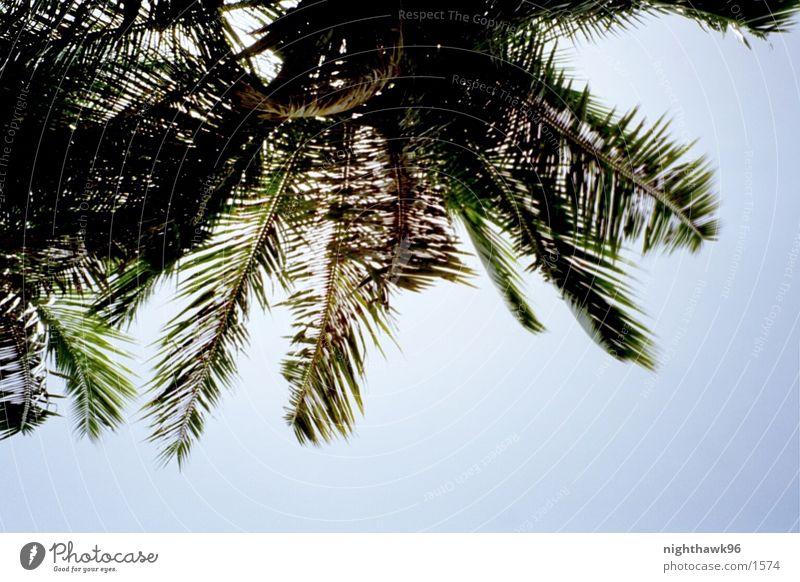 Baccardi Feelin' Palme Strand Ferien & Urlaub & Reisen Rum Kuba Wasser Natur