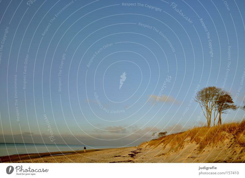 Ostsee Küste Darß Strand Stranddüne Himmel Baum Natur Erholung Ferien & Urlaub & Reisen Umwelt Mann Mensch Einsamkeit ruhig Farbe Meer