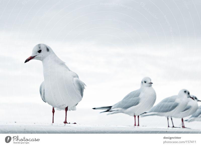 alle doof … Meer Einsamkeit Vogel beobachten Nordsee einzeln Möwe fremd Fremder Außenseiter Tier lau Psychoterror sündigen ausstoßen