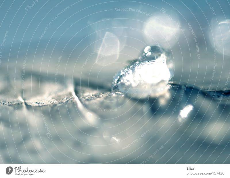 Ein Stückchen Winter Eis Schnee Frost kalt Kristalle Diamant Eiskristall Blatt Natur Makroaufnahme durchsichtig blau frisch Wasser glänzend Nahaufnahme