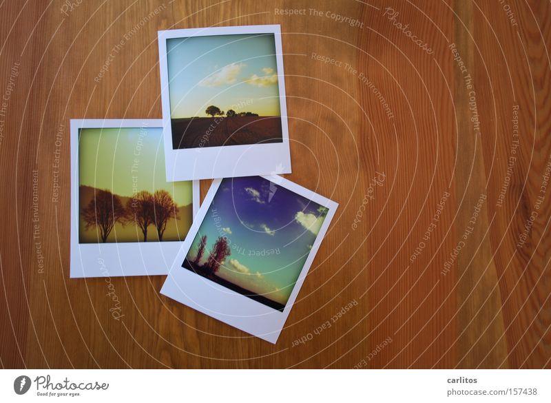 Dreierfinalisierung mit mir selbst Fotografie Erinnerung Fettfinger falsches Polaroid Fotosammlung sammeln und sortieren Erinnerungsstücke