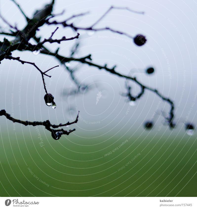 Tropfen Natur blau Pflanze grün Einsamkeit Landschaft ruhig Winter Umwelt Wiese Park Regen Nebel trist wandern Sträucher