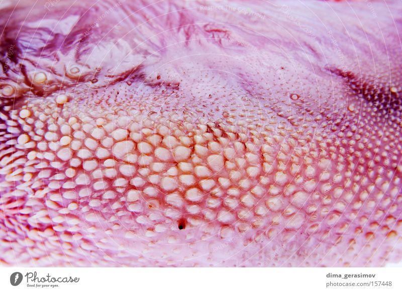 Farbe rosa Hautfalten Falte Stall Säugetier Zunge Zopf Pferch rau Haare & Frisuren