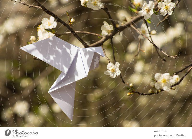 Weißer Origami tauchte den Vogel, der an blühendem Frühlingspflaumenbaum hängt Natur blau schön grün Farbe weiß Baum Blume gelb Liebe Blüte Lifestyle Glück