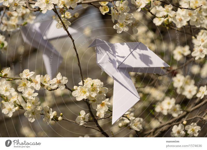 Weißer Origami tauchte die Vögel, die an blühendem Frühlingspflaumenbaum hängen Natur blau schön grün Farbe weiß Baum Blume gelb Liebe Blüte Lifestyle Glück