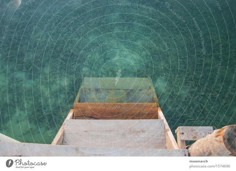 Hinein Erholung Ferien & Urlaub & Reisen Tourismus Ausflug Sommer Sommerurlaub Strand Meer Insel Schwimmen & Baden Pflanze Wasser Schönes Wetter Gras Küste