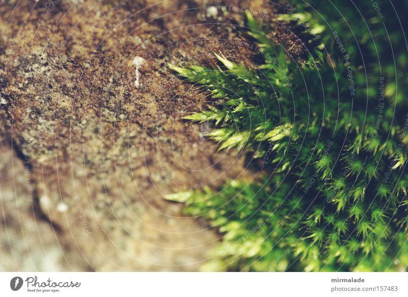 eroberte Burgmauer Natur grün Leben Mauer Hoffnung erobern