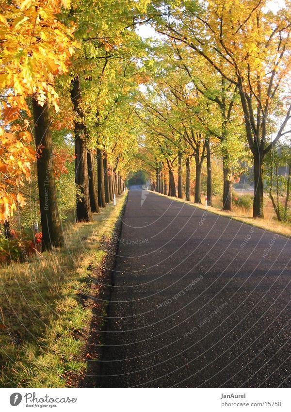 Goldener Herbst Allee Baum Blatt Romantik
