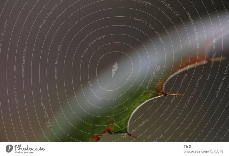 Blatt Natur Pflanze Frühling Herbst Winter Bewegung verblüht ästhetisch authentisch einfach elegant natürlich braun grau grün rot Gelassenheit geduldig ruhig