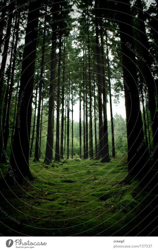 Symmetrie Natur Baum grün Einsamkeit Wald Moos Rheinland-Pfalz Westerwald