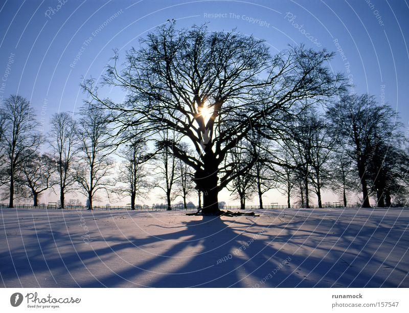 Sonnenuntergang im Winter Baum weiß Schnee Lichterscheinung Eis Landschaft kalt Wald Pflanze Lichteffekt saisonbedingt polar Silhouette