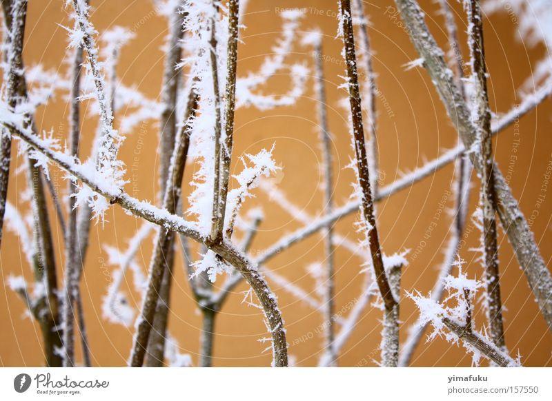 Lachs Winter Neuenburg Schweiz gefroren Geäst Frost Eis Natur schön Schnee