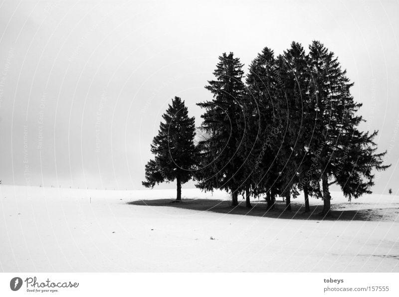 gruppenkuscheln Winter Schnee Eis Frost Baum Wald frieren kalt Einsamkeit Schwarzweißfoto