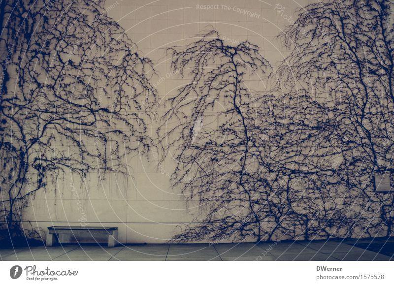 Ruhe Design Dekoration & Verzierung Kunst Kunstwerk Skulptur Architektur Natur Pflanze Baum Sträucher Efeu exotisch Garten Park Bauwerk Mauer Wand Fassade Beton
