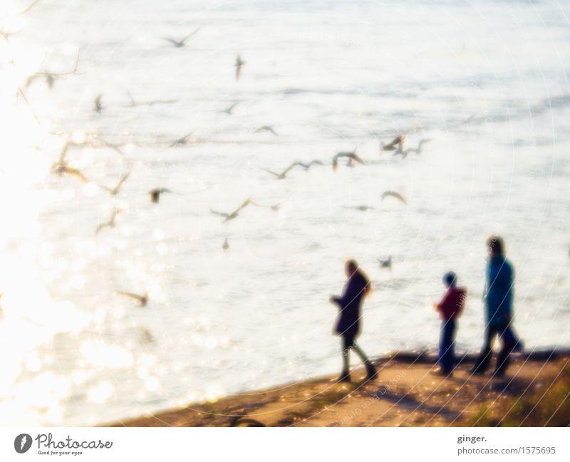 Spaziergang am Rheinufer Ausflug Mensch Familie & Verwandtschaft 3 Menschengruppe Umwelt Natur Erde Luft Wasser Frühling Schönes Wetter Wellen Küste Flussufer