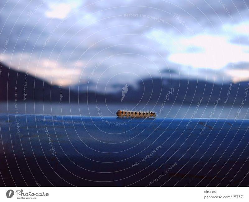 italienische Raupe Insekt Wolken Himmel Italien blau Nahaufnahme vielfüßler blue close insect clouds sky mountains Berge u. Gebirge lago maggioe caterpillar