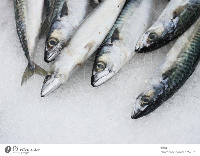 Festplatte für Pescetarier Lebensmittel Fisch Handel Marktstand Marktwirtschaft Wasser Tier Nutztier Totes Tier Tiergesicht Schuppen Tiergruppe Eis liegen