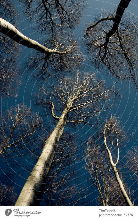 Into the wild wild wood Himmel Natur blau Baum Einsamkeit Wald dunkel Angst hoch Ast geheimnisvoll Zweig mystisch Panik Höhe spukhaft