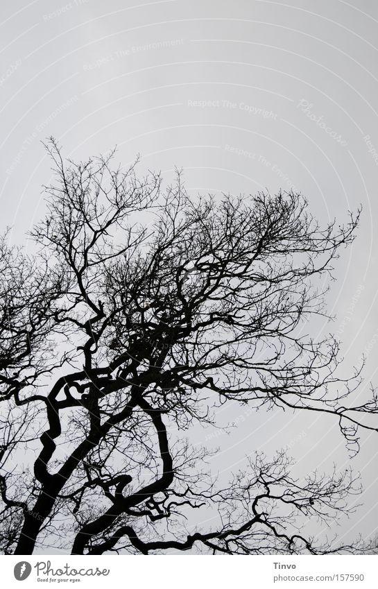 Baum mit Herz Winter trist Ast Baumkrone Zweig kahl trüb Phantasie verwuschelt