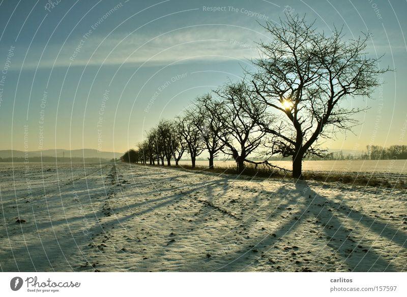 Bitte hinten anstellen .......... 2 aufgereiht Ordnung Baum Winter skurril Silhouette Gegenlicht Ferne Winterspaziergang typisch deutsch Schnee