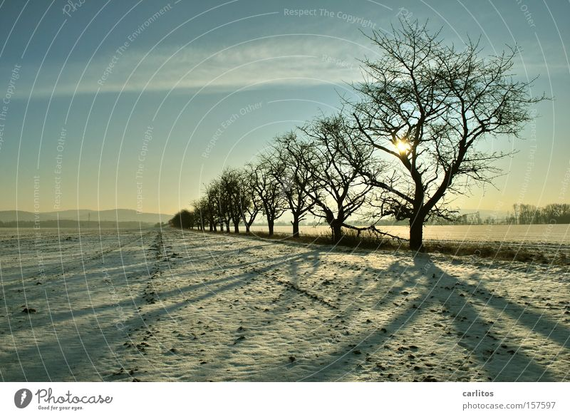 Bitte hinten anstellen .......... 2 Baum Winter Ferne Schnee Ordnung skurril aufgereiht Winterspaziergang