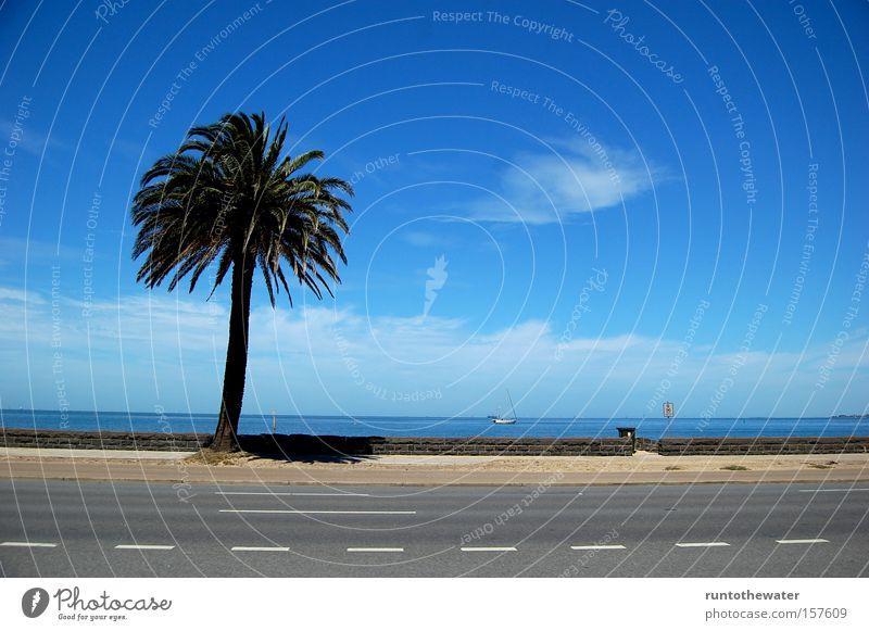 Schattenspender Strand Promenade Meer Wasser Palme Straße Erholung Melbourne Australien Himmel Wolken Autobahn Küste