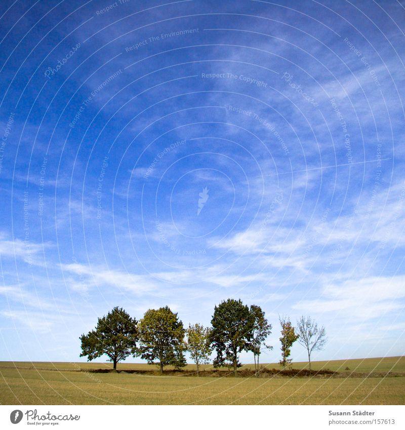 Baumoase Himmel Pflanze Einsamkeit Wiese Landschaft leer Mitte Weide Ödland karg sommerlich