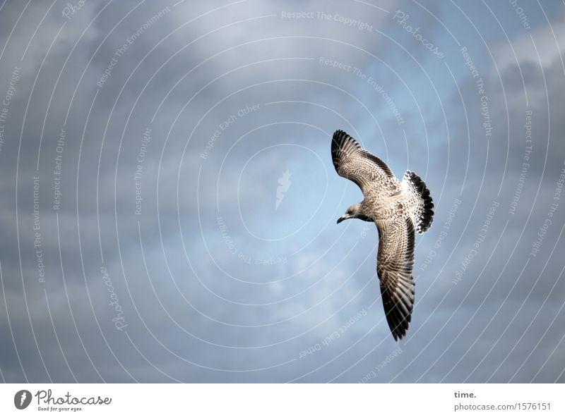 Vogelperspektive Himmel Wolken Schönes Wetter Möwe fliegen Jagd ästhetisch Wachsamkeit Vorsicht Gelassenheit geduldig ruhig Zufriedenheit entdecken