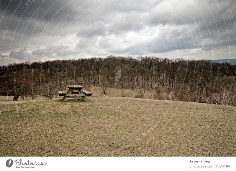 ein trüber Tag im Lainzer Tiergarten Himmel Natur Pflanze Baum Landschaft Einsamkeit Wolken dunkel Wald schwarz Umwelt Frühling Wiese grau braun Horizont