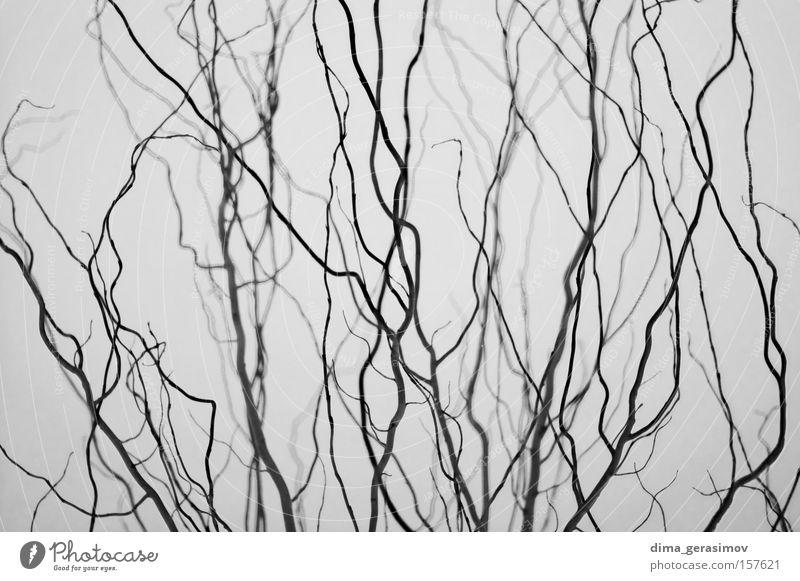 Natur Pflanze Straße Farbe grau Gehirn u. Nerven