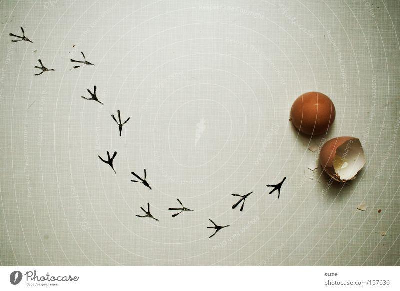 Frisch geschlüpft Lebensmittel Ernährung Bioprodukte Feste & Feiern Ostern Vogel laufen frisch neu Beginn Küken Ei ausrutschen Spuren Hühnerei Flucht Eisprung