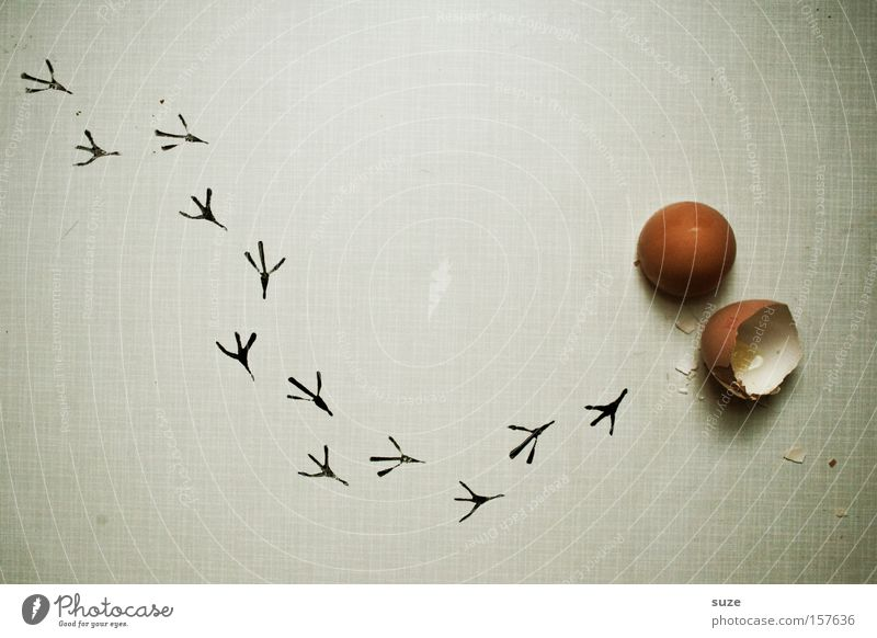 Frisch geschlüpft Vogel Feste & Feiern Lebensmittel laufen Beginn frisch Ernährung neu Ostern Kreativität Idee Spuren Fußspur Ei Bioprodukte Flucht