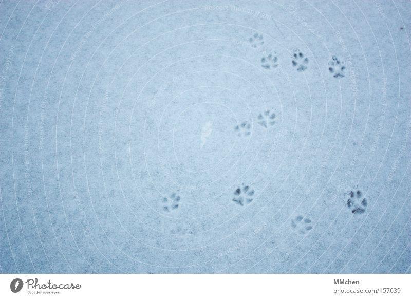 CatWalk Winter Tier kalt Schnee Hund Fuß Katze Eis Spuren Fußspur Säugetier Pfote Zehen Barfuß Fährte orientierungslos