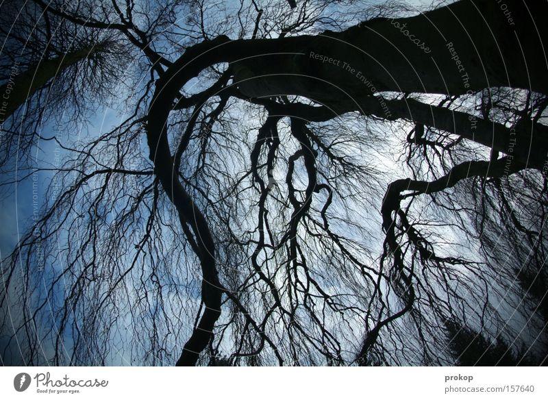 Kraftprotz Natur Himmel Baum Sonne Wolken Hoffnung bedrohlich Frieden Schutz Ast immer